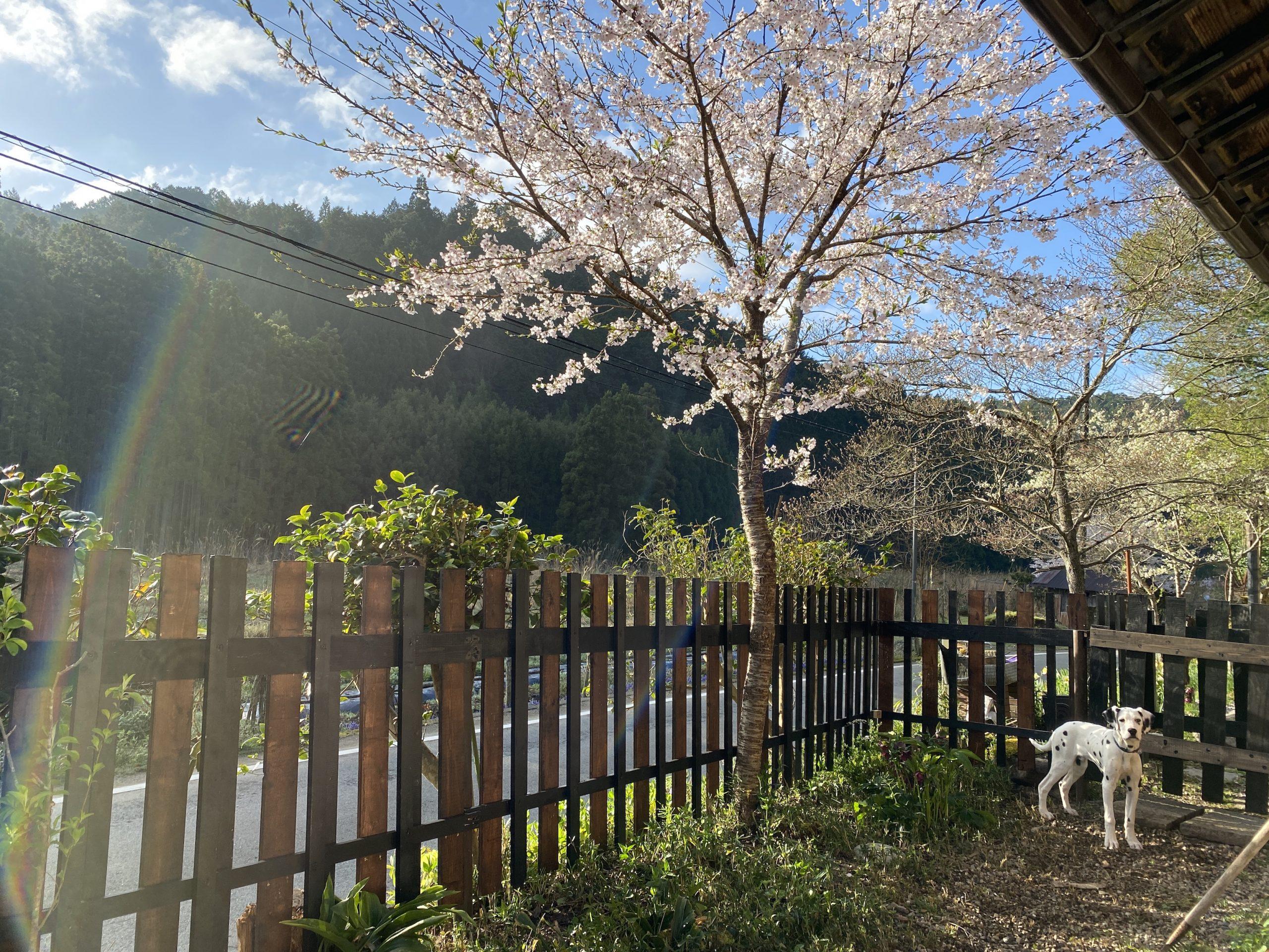 らふ工房_spring_4.2021